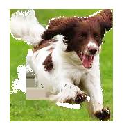 DoggiePLay